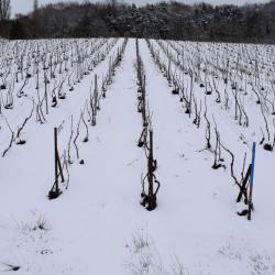 Les vignes sous la neige (1) D. Dumont
