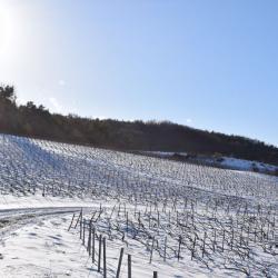 Vigne sous la neige (4) D. Dumont